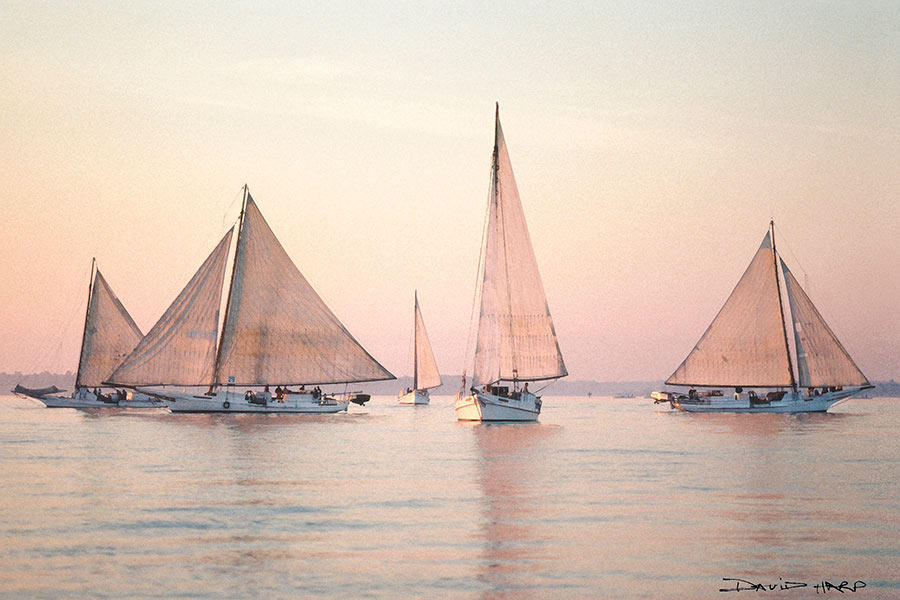 Skipjack Fleet by Dave Harp